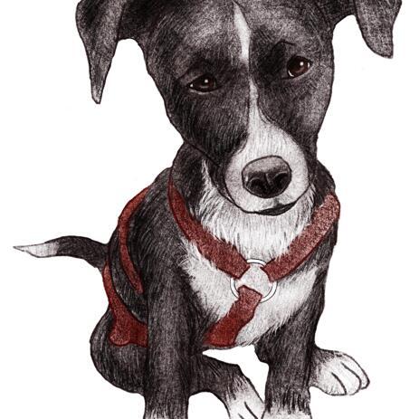 صورة مخصصة للون الكلب من الصور الملونة - example
