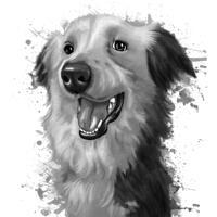 Border Collie Portrait dessin à l'aquarelle en niveaux de gris à partir de photos