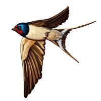 Naturalistic Martins Bird Cartoon Portrait from Photo for Swallows Lovers Caricature Gift