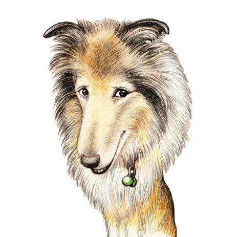Collie Dog Caricature Cartoon in Colored Pencil Style from Photos - example