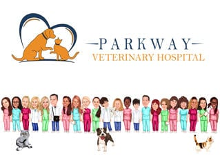 Group Caricature for Veterinary Doctors