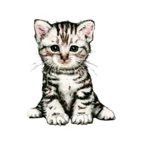 Adorable Kitty Cat Full Body Portrait from Photos in Colored Style - example