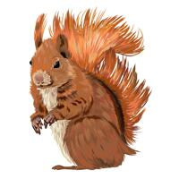 Custom Squirrel Cartoon Portrait Drawing in Color Style from Photo