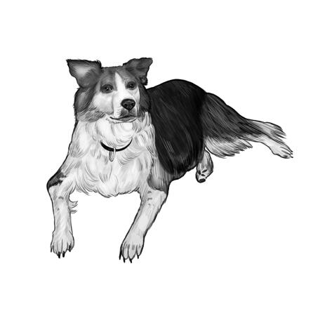 Full Body Border Collie Cartoon Portrait from Photos in Black and White Style - example