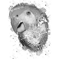 Bird Caricature Portrait in Grayscale Watercolor Style from Photo