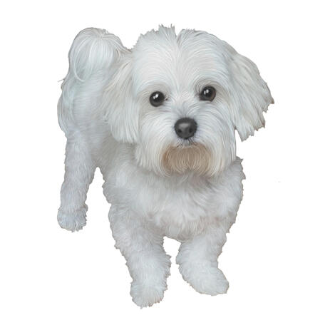 Bichon Caricature Portrait in Full Body Colored Style from Photos - example