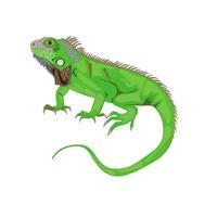 Рептилия мультяшный портрет рисованной по фотографии в цветном цифровом стиле