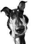 Oreiller pour animaux de compagnie de forme personnalisée example 10