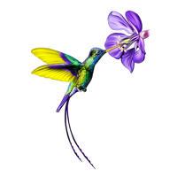 Benutzerdefiniertes Kolibri-Karikatur-Porträt im farbigen Stil
