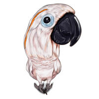Bird Caricature from Photos Hand Drawn in Full Body Color Style
