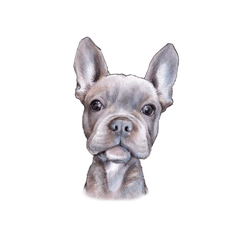 French Bulldog Caricature Portrait from Photos in Color Style for Pet Lovers Gift - example