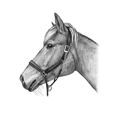 Horse Portrait from Photos in Black and White Style - example