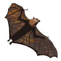 Realistic Bat Cartoonish Color Portrait from Photos