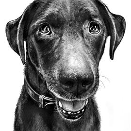 Dog Caricature Portrait in Black and White Style from Photos