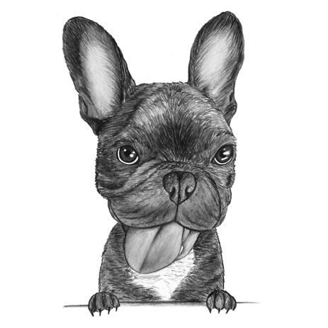 Hand Drawn French Bulldog Caricature Portrait Art in Black and White Pencil Style - example