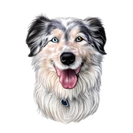 Australian Shepherd Cartoon Drawing in Color from Photos for Custom Dog Lovers Gift - example