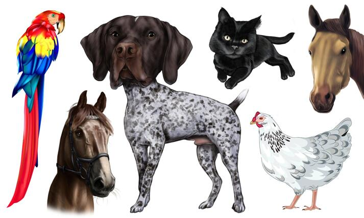 Mixes Pets Caricature large example